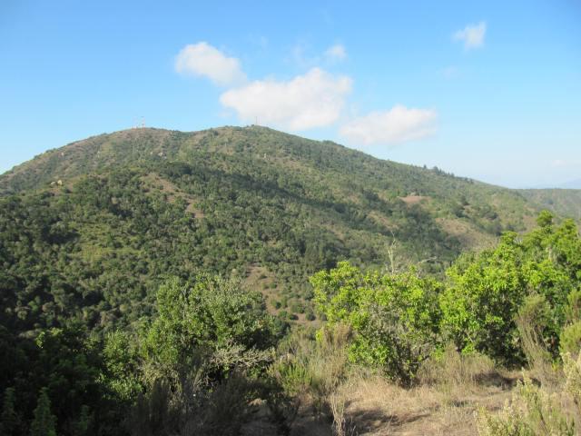 Vista hacia Quebrada Las Piedras en Parque El Boldo